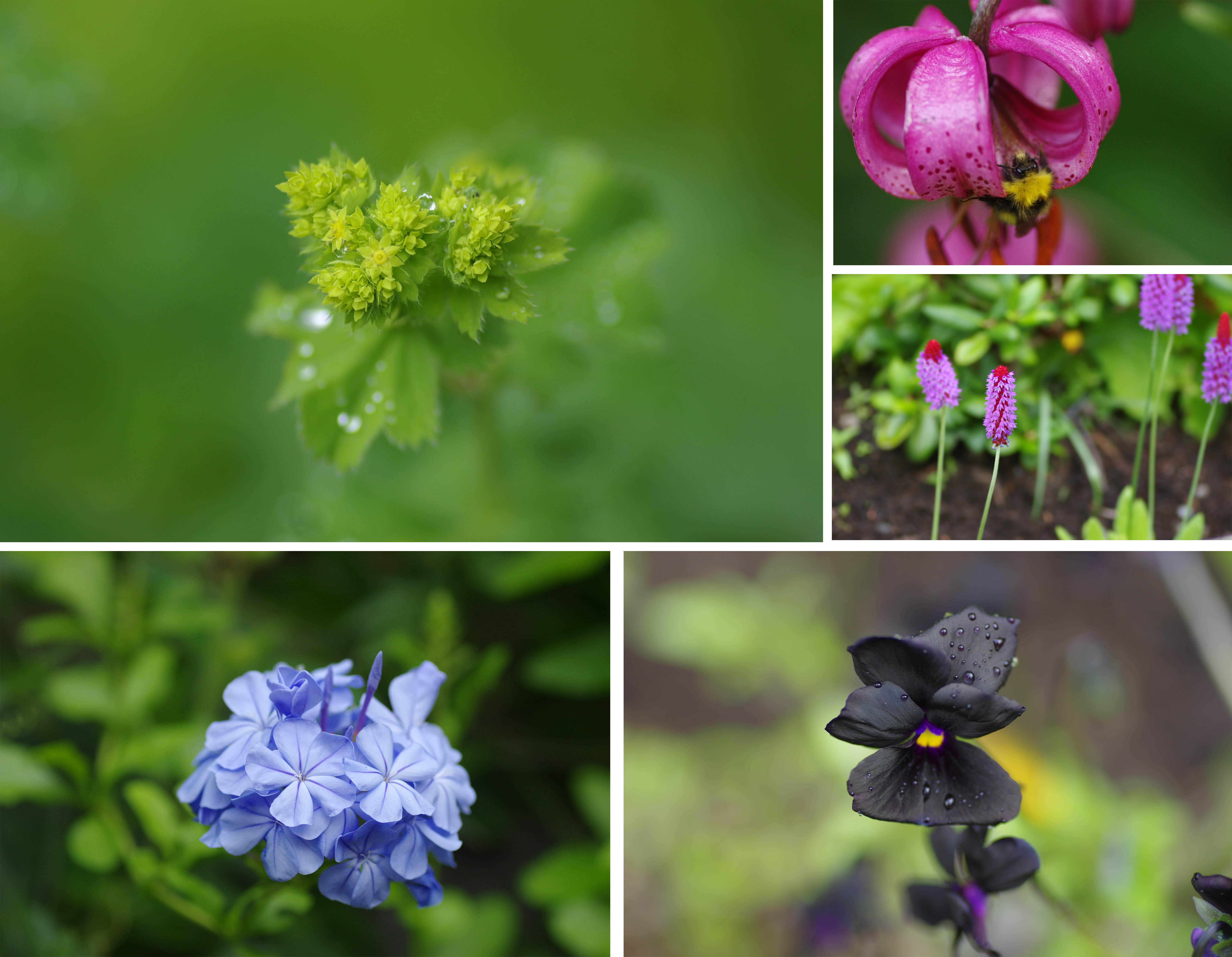 imgp5198-fleurs cahteau Dunvegan skye ecosse