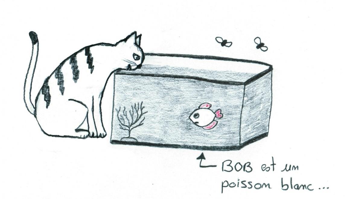 bob-et-le-chat