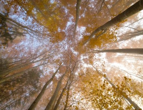 Promenons nous dans les bois… confessions intimes…