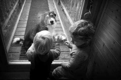 Injustice_selon_mon_chien