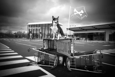 revolution_chien
